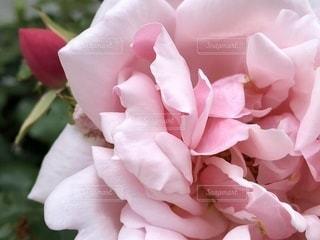 近くの花のアップ - No.1202155