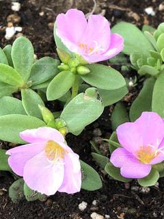 近くの花のアップの写真・画像素材[1202180]