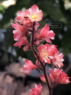近くの植物にピンクの花のアップ - No.1211420