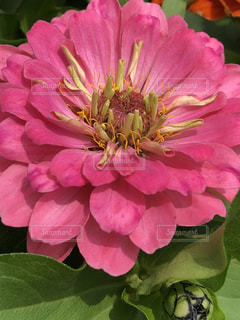 近くの花のアップ - No.1211431