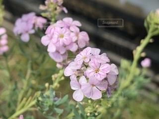 近くの花のアップの写真・画像素材[1211433]