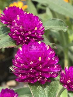 近くに紫の花のアップ - No.1211446