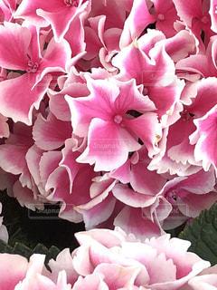 近くの花のアップ - No.1211461