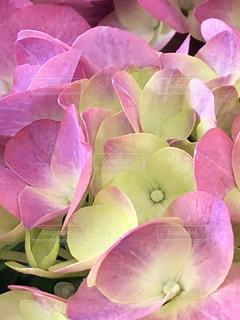 紫の花の束 - No.1211463