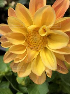近くの花のアップ - No.1211468