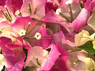 近くの植物にピンクの花のアップの写真・画像素材[1211473]