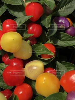フルーツ サラダ ボウルの写真・画像素材[1218701]