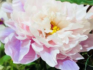 近くの花のアップの写真・画像素材[1223729]