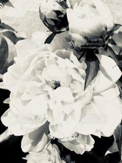 近くの花のアップの写真・画像素材[1223730]