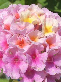 近くの花のアップの写真・画像素材[1226444]
