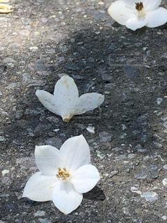 近くの花のアップの写真・画像素材[1286533]