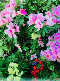 つつじと花の写真・画像素材[1136471]