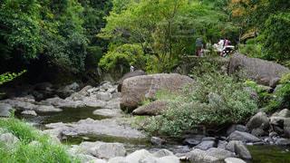 犬鳴山の川の写真・画像素材[765960]