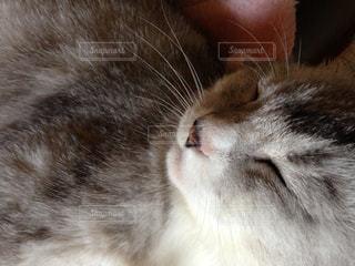 寝る猫の写真・画像素材[1132155]