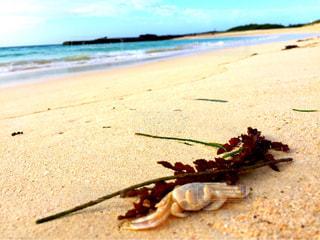 近くの砂浜のビーチの写真・画像素材[1134065]