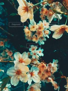 近くの花のアップの写真・画像素材[1129327]