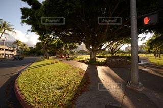 近くの並木通りの写真・画像素材[1129539]