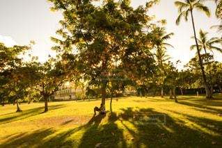 道の真ん中にツリーの写真・画像素材[1129648]