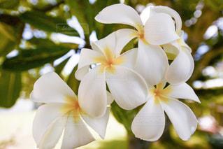 近くの花のアップの写真・画像素材[1136553]
