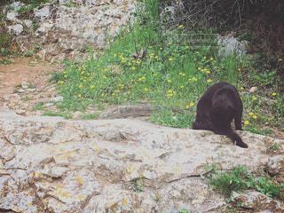 黒い猫の写真・画像素材[1129466]