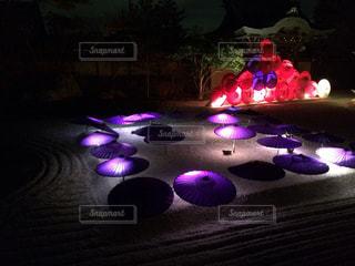 暗い部屋に座っている紫色の花のグループの写真・画像素材[1129611]