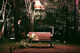 森の中のベンチの写真・画像素材[1198489]