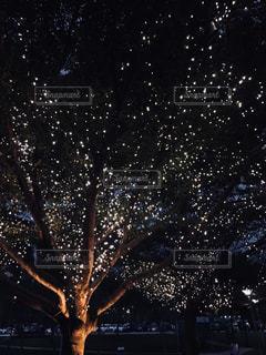 ライトツリー - No.1134892