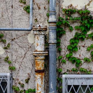 ビルの壁をはう蔦とパイプの写真・画像素材[1130472]