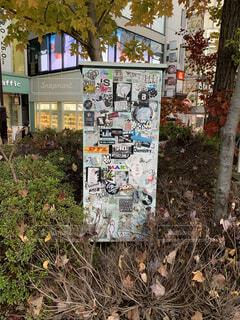 木の側面に落書きのある建物の写真・画像素材[3984473]