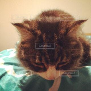 ベッドの上で眠っている猫の写真・画像素材[1130927]