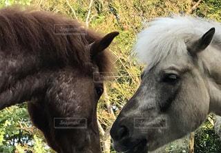 馬の会話の写真・画像素材[1143260]