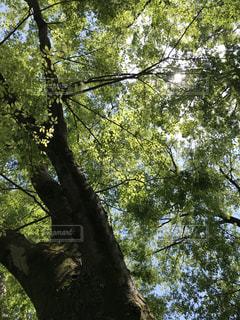 近くの木のアップの写真・画像素材[1143883]