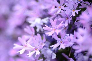近くの花のアップの写真・画像素材[1131497]