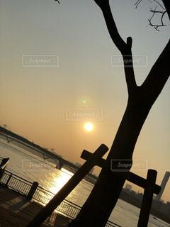背景の夕日とツリーの写真・画像素材[1131622]
