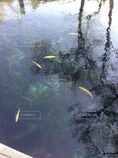 近くに池のアップの写真・画像素材[1285250]