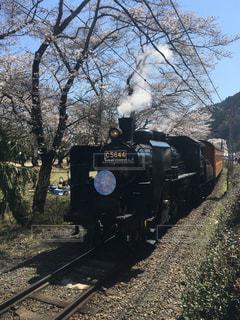 SLさくらと桜の写真・画像素材[1132981]