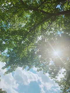 近くの木のアップの写真・画像素材[1162653]