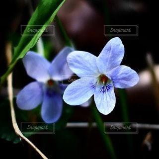 自然の写真・画像素材[37888]