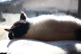 猫の写真・画像素材[38020]