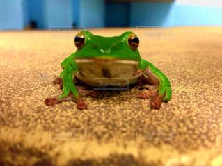 近くにカエルのアップの写真・画像素材[1134233]