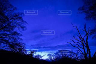 曇り青空の前に木の写真・画像素材[1133763]
