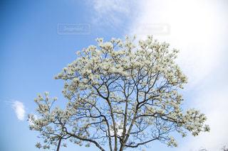 近くの木のアップの写真・画像素材[1133772]