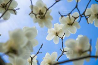 近くの花のアップの写真・画像素材[1133780]