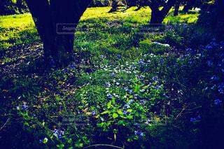 緑豊かな緑の森に立っている人の写真・画像素材[1136040]