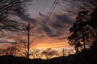 背景の夕日とツリーの写真・画像素材[1146347]