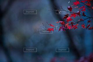 木のぼやけた写真の写真・画像素材[1149212]