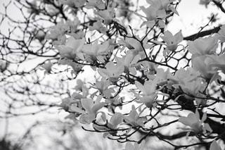 近くの木のアップの写真・画像素材[1149463]