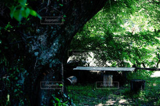 フォレスト内のツリーの写真・画像素材[1231154]