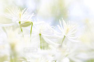近くの花のアップの写真・画像素材[1449187]