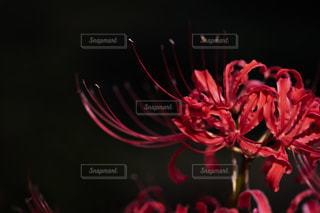 近くの花のアップの写真・画像素材[1551856]
